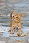CAT 03 KH0195 01