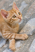 CAT 03 KH0198 01
