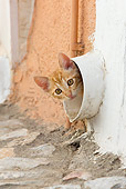 CAT 03 KH0199 01