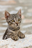 CAT 03 KH0203 01