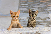 CAT 03 KH0204 01