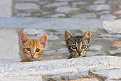 CAT 03 KH0205 01