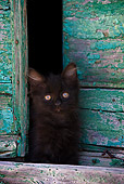 CAT 03 KH0209 01