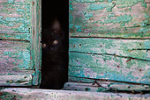 CAT 03 KH0210 01