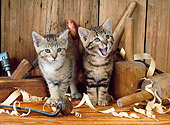 CAT 03 KH0214 01