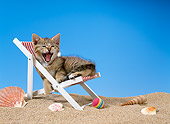 CAT 03 KH0217 01