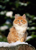 CAT 03 KH0221 01