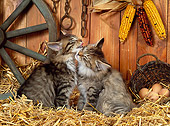CAT 03 KH0223 01