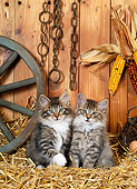 CAT 03 KH0224 01