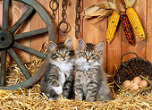 CAT 03 KH0225 01