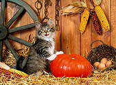 CAT 03 KH0232 01