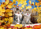 CAT 03 KH0235 01
