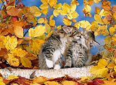 CAT 03 KH0236 01