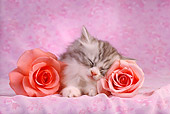 CAT 03 RC0002 01