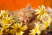 CAT 03 RC0004 01