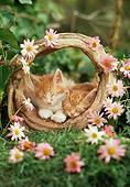 CAT 03 RC0009 01