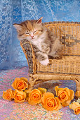 CAT 03 RC0012 01