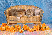 CAT 03 RC0013 01