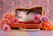 CAT 03 RC0014 01