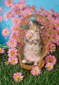 CAT 03 RC0016 01