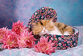 CAT 03 RC0018 01