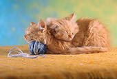 CAT 03 RC0019 01