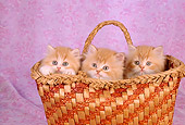 CAT 03 RC0023 01