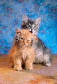 CAT 03 RC0025 01