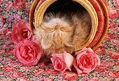 CAT 03 RC0031 01