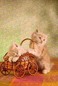 CAT 03 RC0033 01