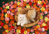 CAT 03 RC0041 01