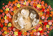 CAT 03 RC0042 01