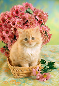 CAT 03 RC0043 01