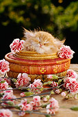 CAT 03 RC0044 01