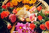 CAT 03 RC0045 01
