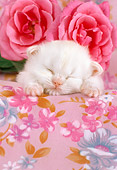 CAT 03 RC0047 01