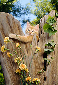 CAT 03 RC0050 01