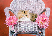 CAT 03 RC0051 01