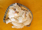 CAT 03 RC0053 01