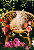 CAT 03 RC0054 01