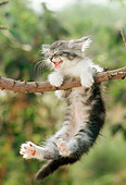 CAT 03 RC0055 01