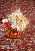 CAT 03 RC0065 01