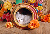CAT 03 RC0066 01