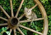 CAT 03 RC0083 01