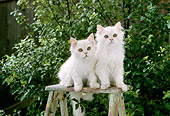 CAT 03 RC0084 01