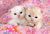 CAT 03 RC0085 01
