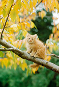CAT 03 RC0090 01
