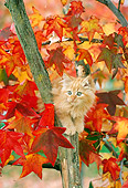 CAT 03 RC0091 01