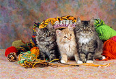 CAT 03 RC0093 01