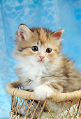 CAT 03 RC0095 01